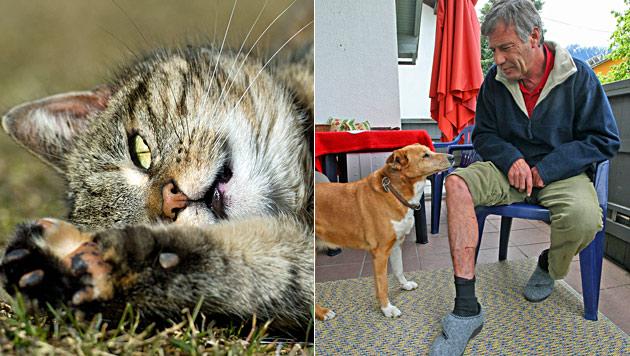 Hauskatzen attackierten in Tirol Spaziergänger (Bild: dpa-Zentralbild/Patrick Pleul, Christof Birbaumer)