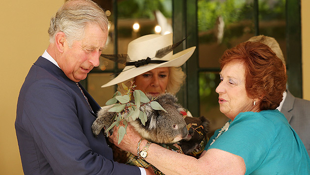 Herzogin Camilla wird mit Koala-Baby nicht warm (Bild: dapd)