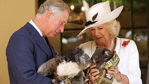 Herzogin Camilla wird mit Koala-Baby nicht warm (Bild: EPA)