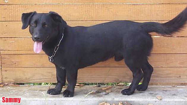Vermisste Vierbeiner und Hunde zur Vergabe (Bild: Tierheim Franziskus)