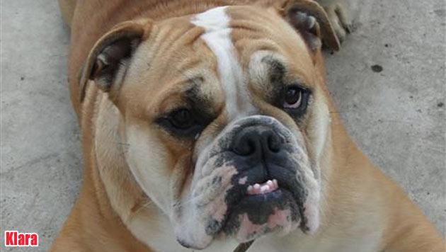 Vermisste Vierbeiner und Hunde zur Vergabe (Bild: Tierheim Purzel & Vicky)