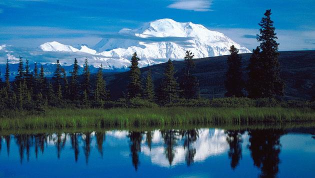 Alaska: Auge in Auge mit Grizzly und Elch (Bild: thinkstockphotos.de)