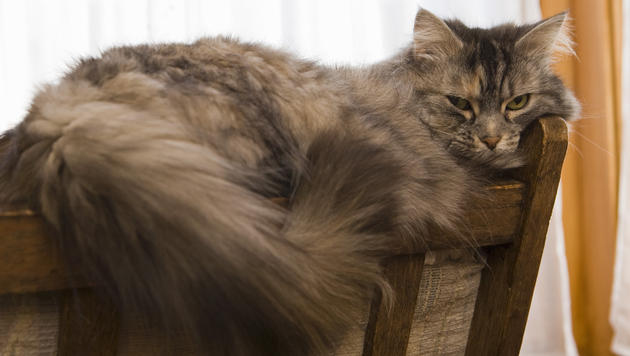 Daran erkennst du, ob du deine Katze richtig ernährst (Bild: thinkstockphotos.de)