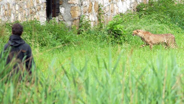 Verfahren gegen Salzburger Zoo-Chefin eingestellt (Bild: APA/Neumayr/MMV)