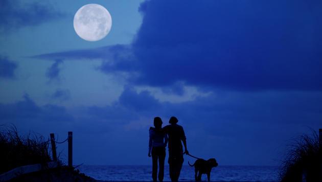 Wie Sie Ihren Hund in der Dämmerung schützen (Bild: thinkstockphotos.de)