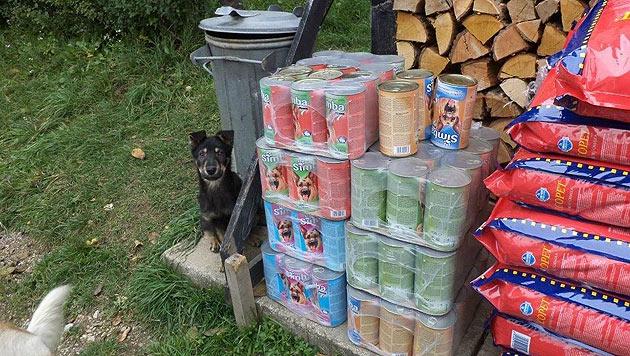 """Verein """"PINO"""" organisiert Hilfe für bosnische Streuner (Bild: """"Paws in Need Organisation"""" (PINO))"""