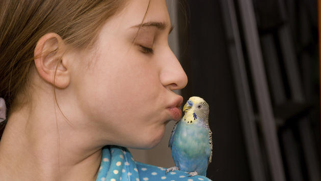Wie Wellensittich und Co. ihre Zuneigung zeigen (Bild: thinkstockphotos.de)