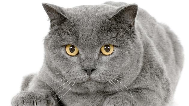 Wissenswertes rund um die Fellpflege Ihrer Katze (Bild: thinkstockphotos.de)