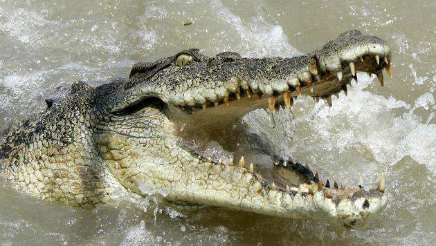 Menschliche Überreste in Krokodil entdeckt (Bild: AP (Symbolbild))