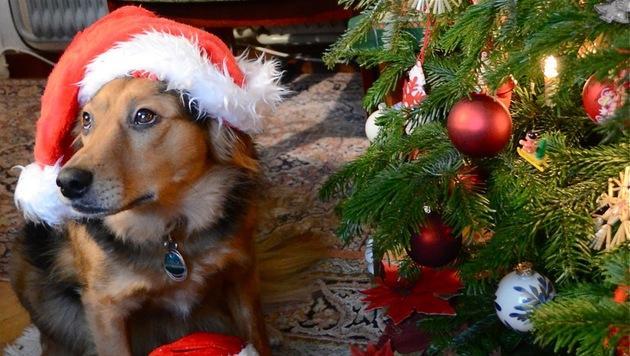 """""""Animal Care International"""" lädt zum Adventfest (Bild: Renate Grell)"""