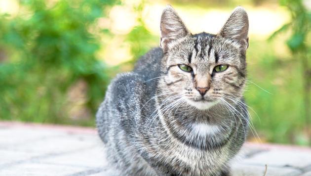 Wie du eine verschwundene Katze wiederfindest (Bild: thinkstockphotos.de)