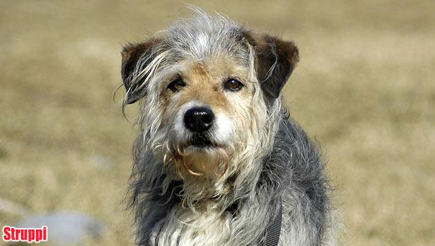 Hunde suchen ein neues Zuhause (Bild: Tierheim Krems)