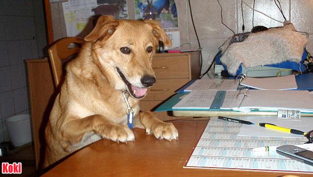 Hunde suchen ein neues Zuhause (Bild: Tierschutz Burgenland)
