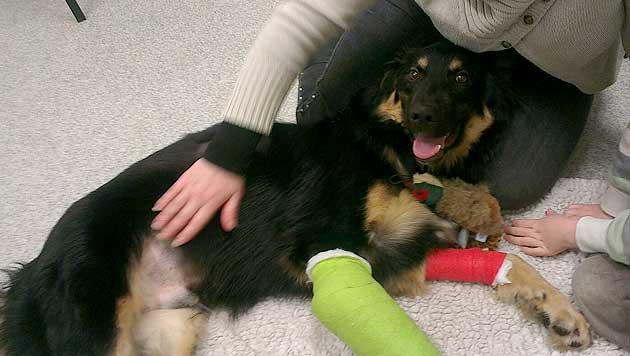 GB: Schäferhund-Mix rettet Kind vor Kollision mit Laster (Bild: Carly Riley)