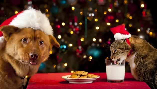 Tipps für gelungene Weihnachten mit Ihrem Tier (Bild: thinkstockphotos.de)