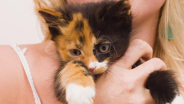Das sind die Liebesbeweise Ihrer Katze (Bild: thinkstockphotos.de)