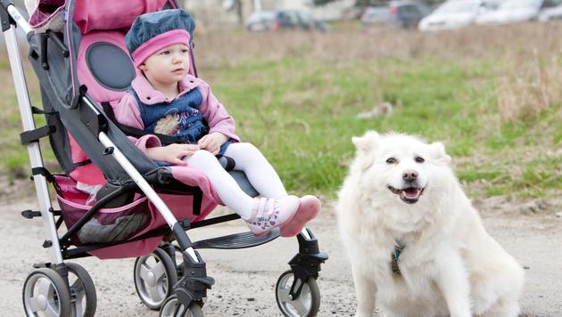 Vierbeiner können Schwangere körperlich stärken (Bild: thinkstockphotos.de)
