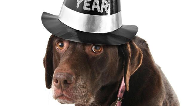 Haustiere jetzt schon auf Silvester vorbereiten (Bild: thinkstockphotos.de)