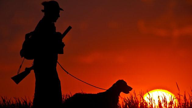 Jäger dürfen Hunde erschießen, die nicht wildern (Bild: dpa/Patrick Pleul)