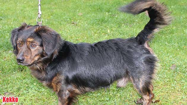 Vergabehunde und vermisste Vierbeiner (Bild: Landestierschutzverein Steiermark)