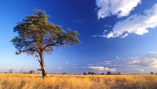 Reise durch Namibia: Der Weg ist das Ziel (Bild: thinkstockphotos.de)