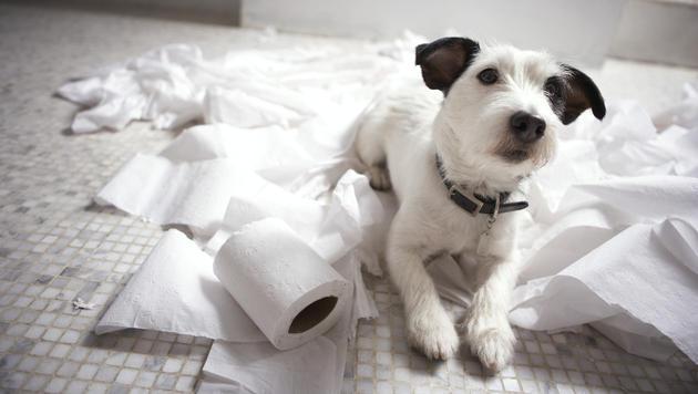 Wie Sie Ihren Hund ans Alleinbleiben gewöhnen (Bild: thinkstockphotos.de)