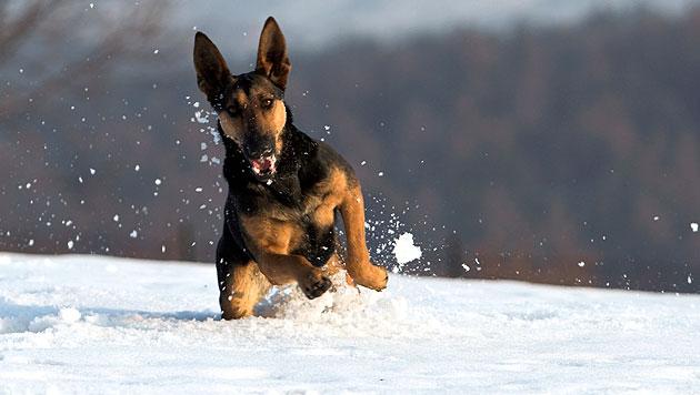 Frauerl rettete ihren ins Eis eingebrochenen Hund (Bild: thinkstockphotos.de (Symbolbild))