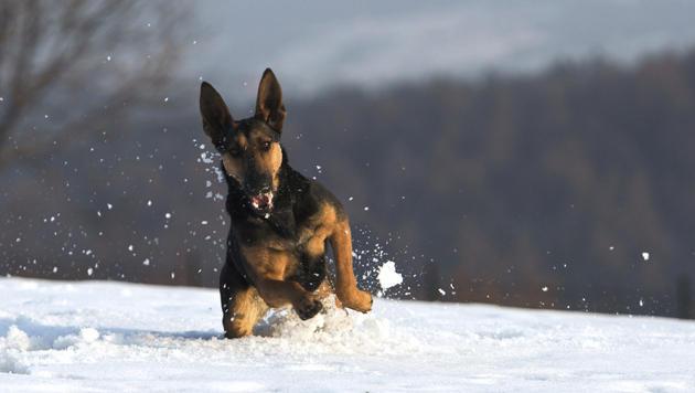 Wie Sie Ihren Hund gut durch den Winter bringen (Bild: thinkstockphotos.de)