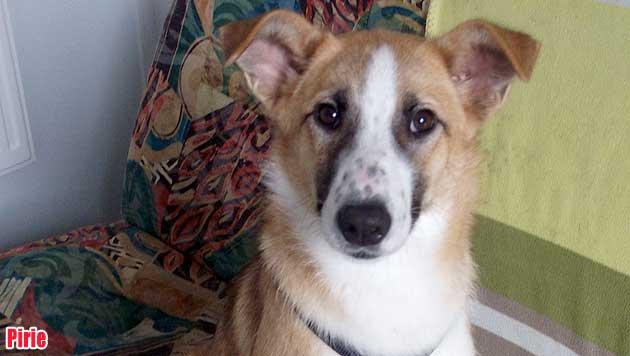 Hunde suchen ein neues Zuhause (Bild: Tierheim Franziskus)