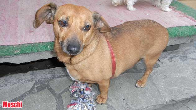 Hunde suchen ein neues Zuhause (Bild: Tierschutz Alkoven)