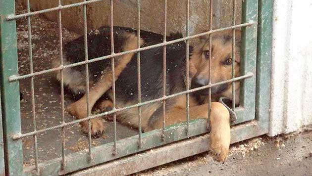 Viele Hunde im Tierheim Györ drohen zu erfrieren (Bild: Cosma Stöger)