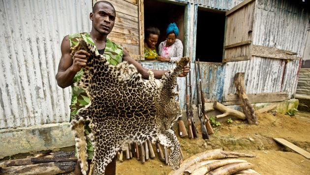 WWF will mit Drohnen Jagd auf Wilderer machen (Bild: AP)