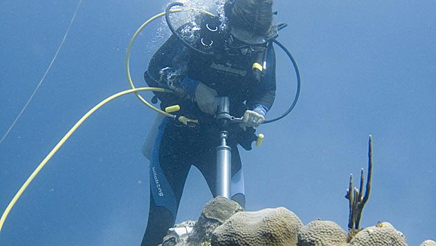 Korallen zeichneten Geschichte der Kernwaffentests auf (Bild: Uni Wien/Brad Erisman)