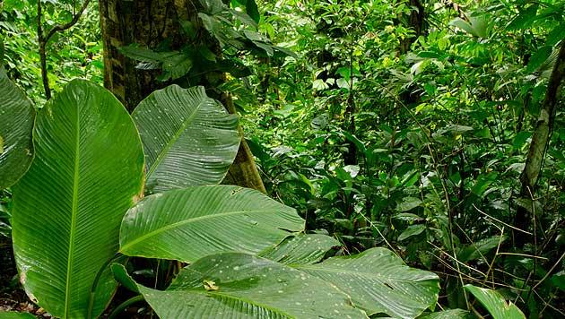 Regenwald: Riesige Artenvielfalt selbst auf kleinstem Fleck (Bild: thinkstockphotos.de)