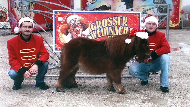 """Verzweifelte Suche nach Zirkus-Pony """"Friedolin"""" in Wien (Bild: Gerhard Bartel)"""