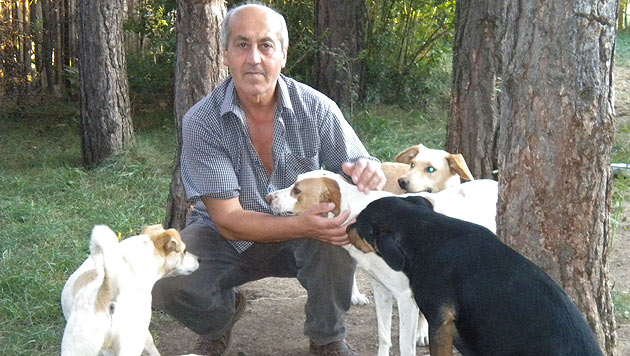 """""""Engel von Bugojno"""" kämpfen für Streunerhunde (Bild: Paws in Need Organisation)"""