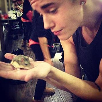 Hamster-Freunde werfen Bieber Tierquälerei vor (Bild: Twitter)