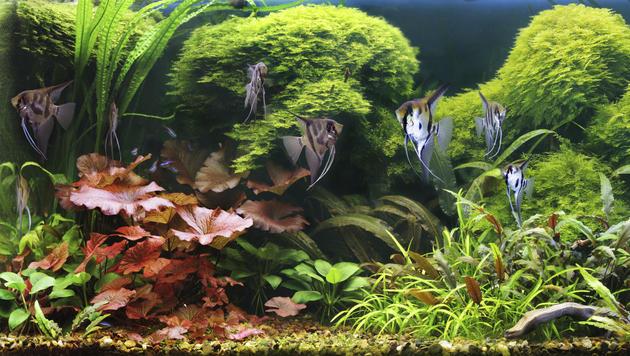 Fische können sich im Wasser gut riechen (Bild: thinkstockphotos.de)