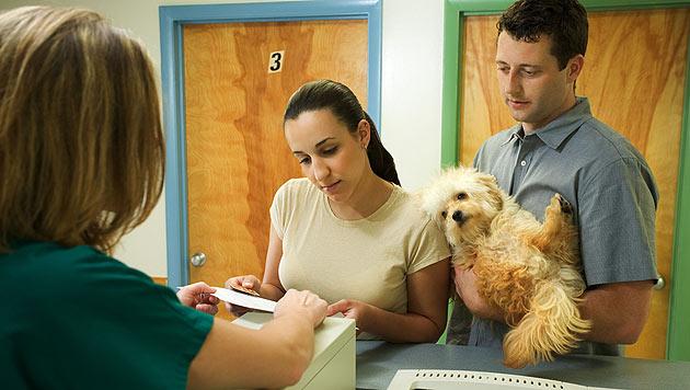 Wenn Hundebesitzer auf Kur gehen möchten (Bild: thinkstockphotos.de)