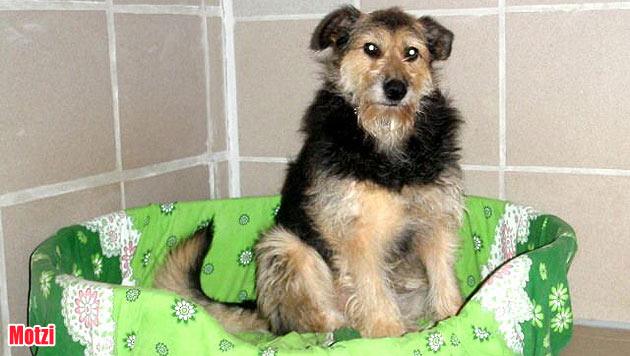 Diese Hunde suchen ein neues Zuhause (Bild: Tierschutz Burgenland)