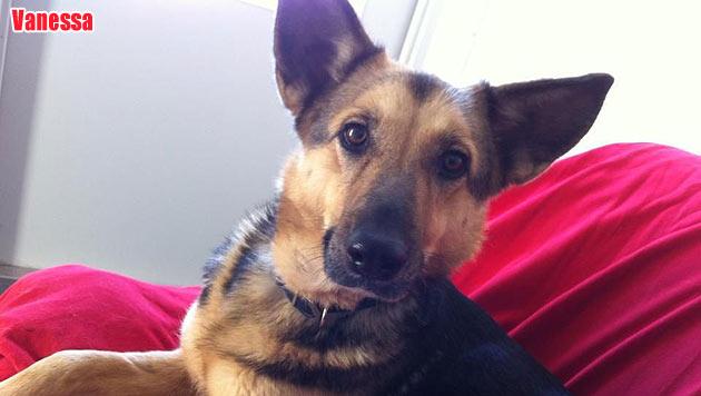 Diese Hunde suchen ein neues Zuhause (Bild: Tierheim Franziskus)