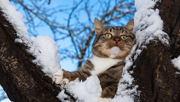 So kommen Katzen gut durch den Winter (Bild: thinkstockphotos.de)
