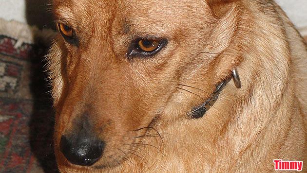 Diese Hunde suchen ein neues Zuhause (Bild: Tierschutzverein Purzel & Vicky)