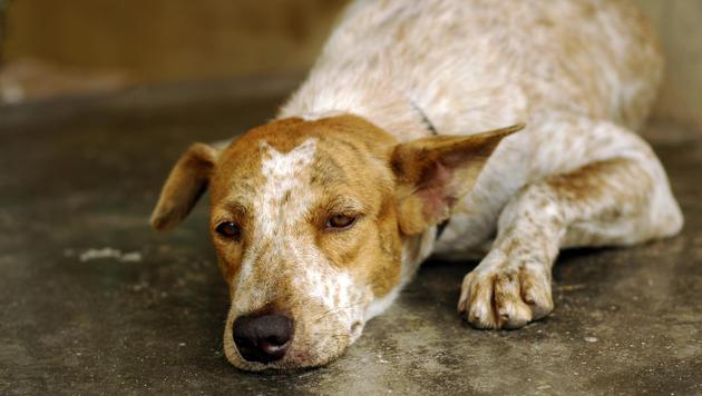 Hund holt im Tierheim Hilfe für krankes Herrchen (Bild: thinkstockphotos.de (Symbolbild))