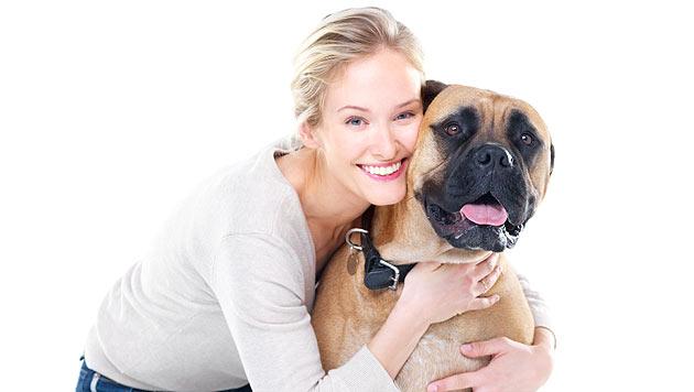 Hunde aus zweiter Hand optimal eingewöhnen (Bild: thinkstockphotos.de)