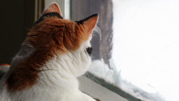 So wird der Winter für Stubentiger zur Wohlfühlzeit (Bild: thinkstockphotos.de)