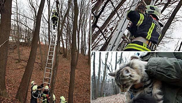 http://imgl.krone.at/Bilder/2013/01/07/Feuerwehr_rettet_Katze_von_Baum_in_neun_Metern_Hoehe-Tierischer_Einsatz-Story-346657_630x356px_ebdf89c1e691dadf46c93aecca153841__klb_jpg.jpg