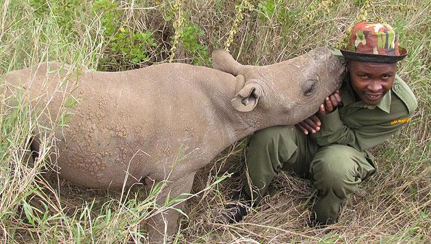 """Blindes Nashorn-Baby """"Nicky"""" wird nie sehen können (Bild: Lewa Wildlife Conservancy)"""