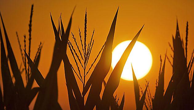 Österreich drohen vermehrt Hitzewellen und Dürre (Bild: EPA)