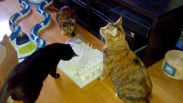 """""""So gewöhnten sich meine Katzen aneinander"""" (Bild: nsc)"""